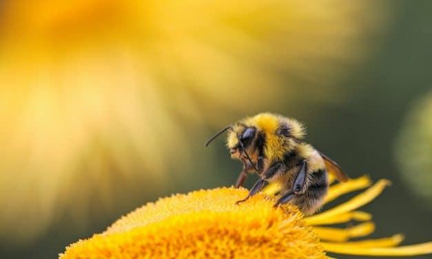 데이터 분석기업 SAS가 꿀벌에 관심 갖는 이유