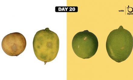 식물성 코팅제로 식량 문제 해결하려는 '어필 사이언스'